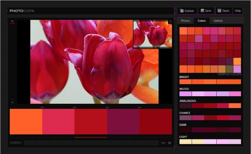 Colour Scheme Tulips