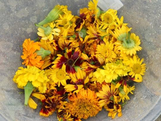 Flower Harvest in My Dyeing Garden