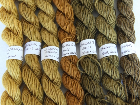 Alum mordanted wool dyed with Coreopsis tinctoria stems and leaves