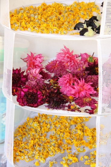 drying flowers for dyeing