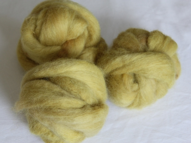 Finnsheep top dyed with Alchemilla mollis