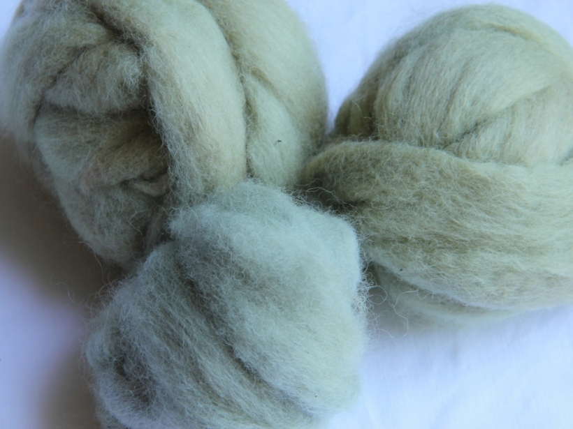 Finnsheep top dyed with purple basil. The wool in front - a pale bluey grey - is the unmodified colour on alum mordanted wool. In a wash this lost some of its blueness, and became a bit more green. The two at the back are the more greener versions from an alkaline bath. The light green colour.